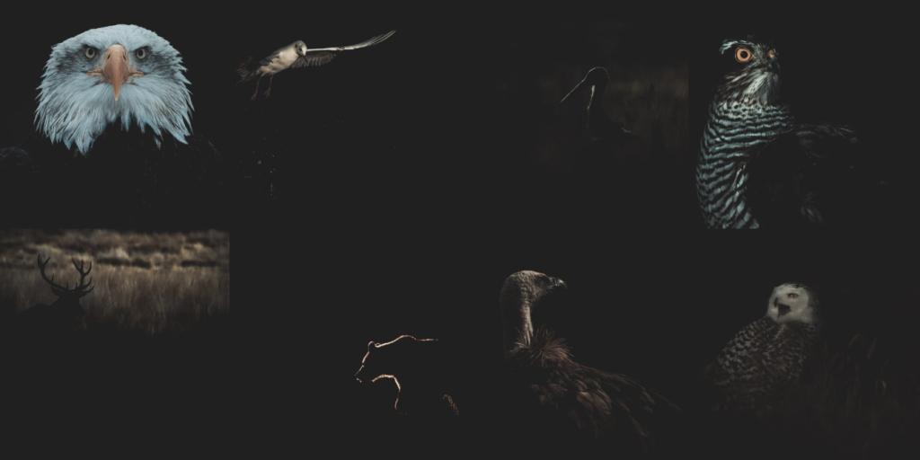 Galeries photos en page d'accueil sur le nouveau site internet du photographe Emmanuel Tardy